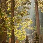 japan-photo-guide-386