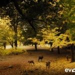 Japan Photo Guide Fall-001