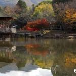 Japan Photo Guide Fall-003