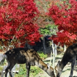 Japan Photo Guide Fall-007