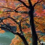 Japan Photo Guide Fall-013