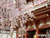 Tokyo and Kyoto-15-japanphotoguide