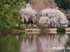 Tokyo and Kyoto-18-japanphotoguide