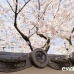Kyoto-42-japanphotoguide