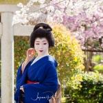 113-Kyoto-Geiko-Portrait-Cherry-Blossom