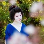 120-Kyoto-Geiko-Portrait-Cherry-Blossom