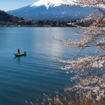 Japan-Cherry-Blossom-361-L