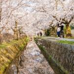 089-Kyoto-Cherry-Blossom