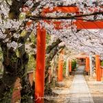 092-Kyoto-Cherry-Blossom