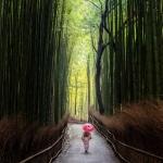099-Kyoto-Cherry-Blossom