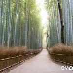 kyoto-bamboo-006