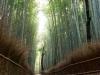 kyoto-bamboo-001