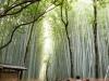 kyoto-bamboo-004