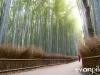 kyoto-bamboo-007