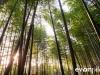 kyoto-bamboo-008