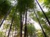 kyoto-bamboo-009