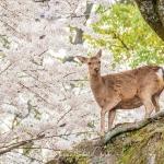 02-miyajima-japan-photo-guide-023