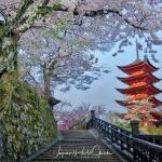 02-miyajima-japan-photo-guide-027-1