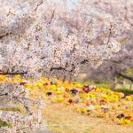 03-himeji-japan-photo-guide-032