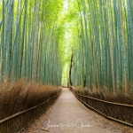 Japan-Photo-Guide-Kyoto-025